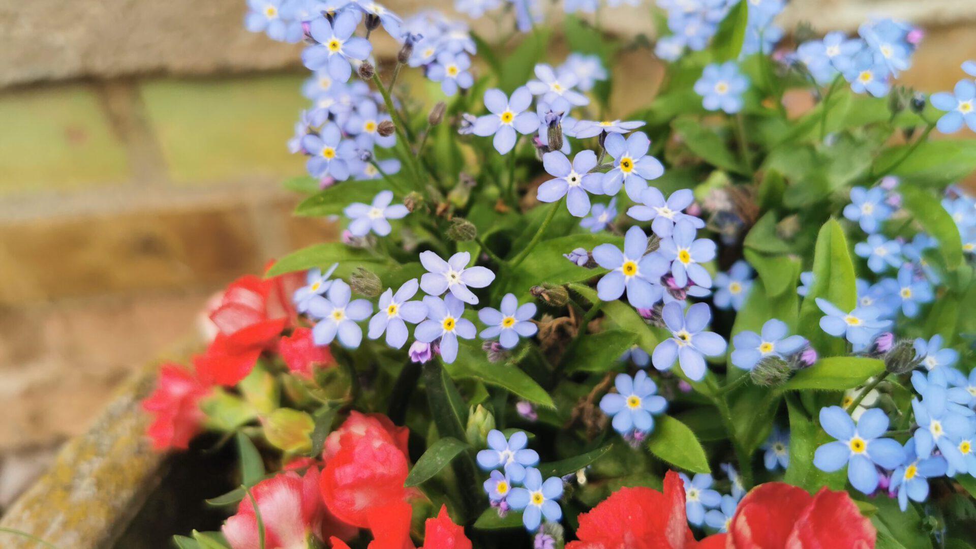 Willkommen bei Eckes Blumenwelt