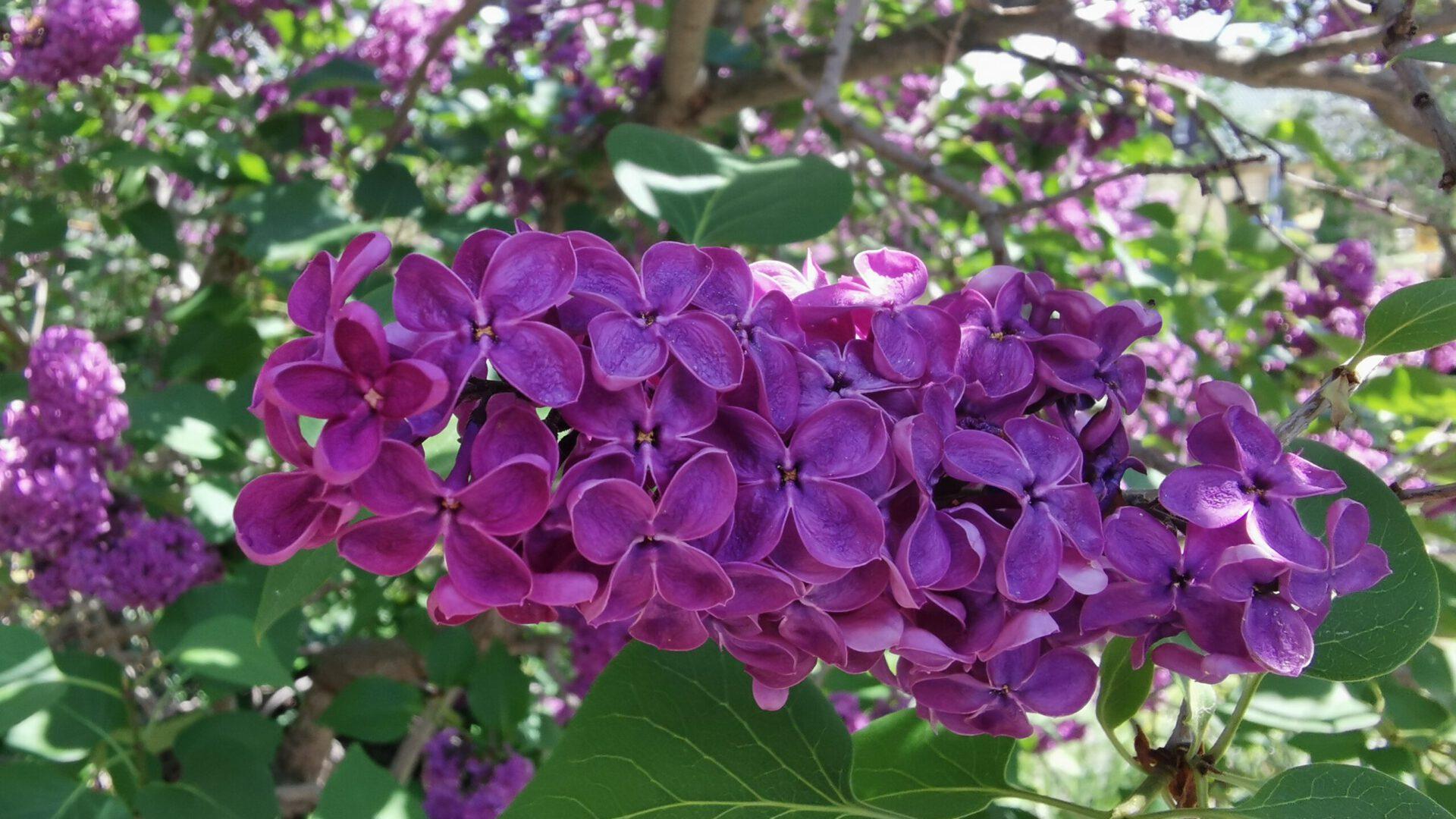Eckes Blumenwelt